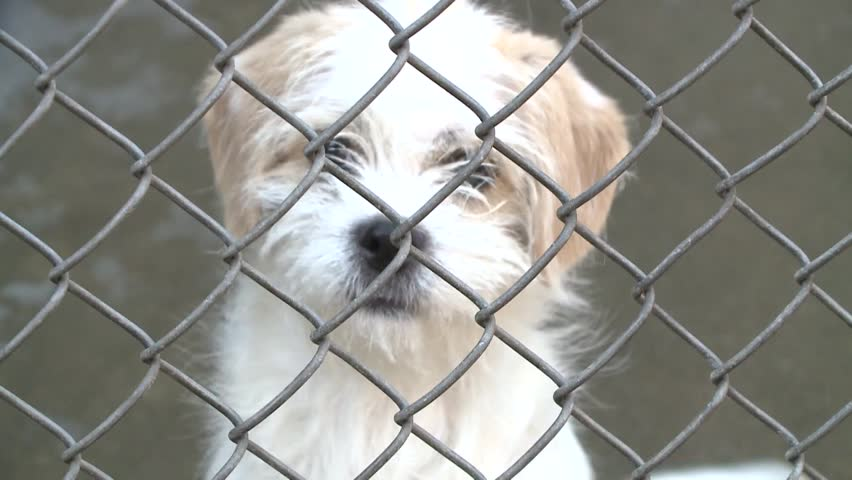 Sad crying puppy dog eyes in shelter behind fence depressed  stock video clip 1080 1920x1080 HD