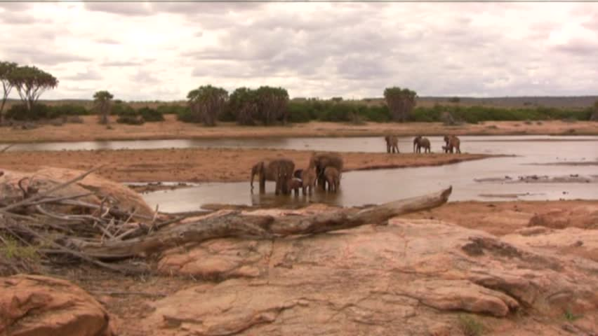elephants in the river : zoom in  - HD stock video clip