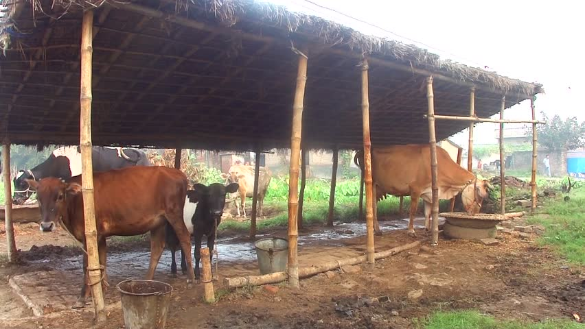how to start dairy farm in bihar