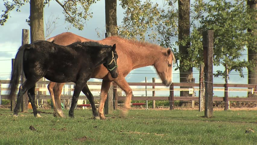 Horses - HD stock footage clip