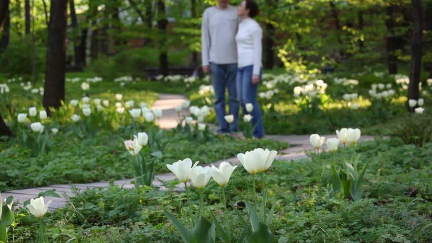 Couple walks in the park among tulips  - HD stock footage clip