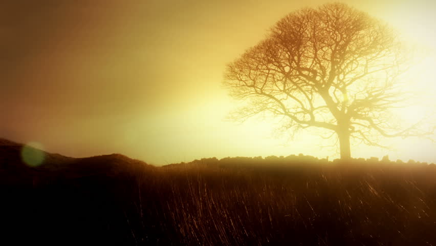 Romantic solitary Tree HD Stock Footage. A single bare leafed tree with a beautiful orange sunlight shining through the branches. Full HD, Color Graded, Blackmagic Cinema Camera.