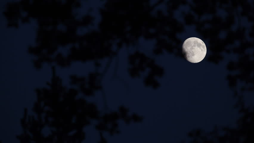 Almost full moon moving fast across dark night sky (shot through branches of a majestic tree) | Shutterstock HD Video #569977