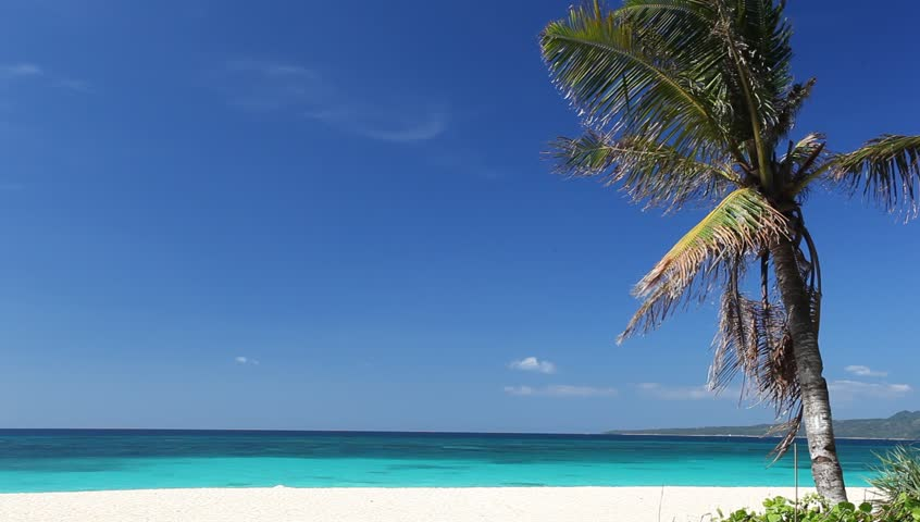 Tropical beach with coconut palm, Philippines, Boracay