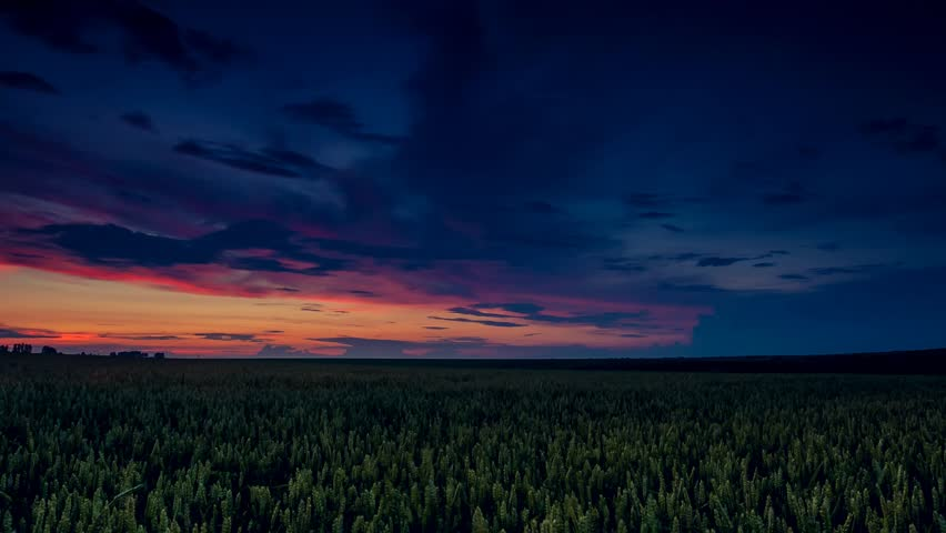 Close up of fresh evening wheat in spring field. Dramatic overcast sky. Time lapse clip. HD video (High Definition)