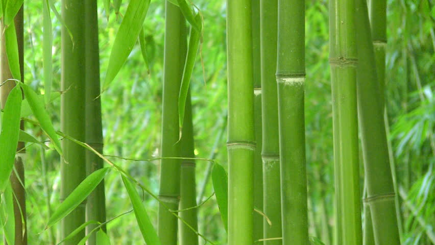 Bamboo background, HD - HD stock footage clip
