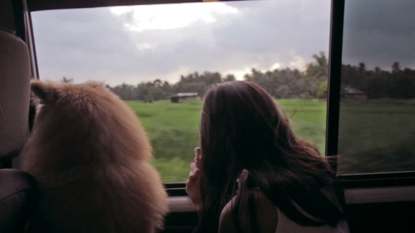 Dog and a girl watching a cloudy afternoon landscape from a window of a car. - HD stock footage clip