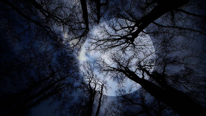 trees night moon blotch - photo #27