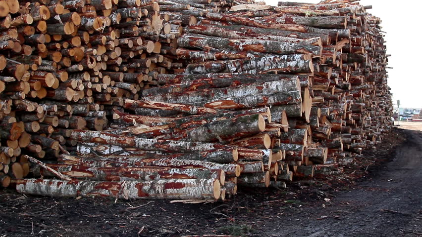 Set of big logs piled on the ground