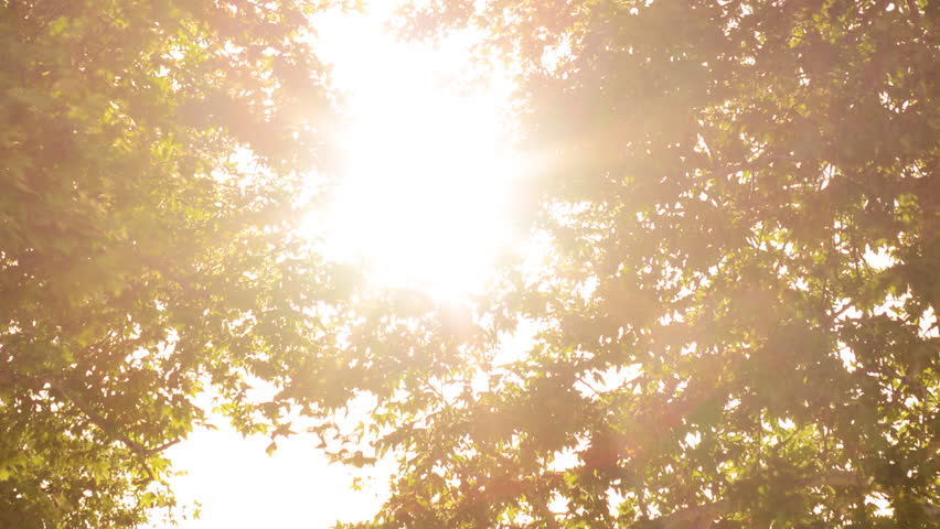 Time Lapse of Sun behind Two Trees -Close Up-