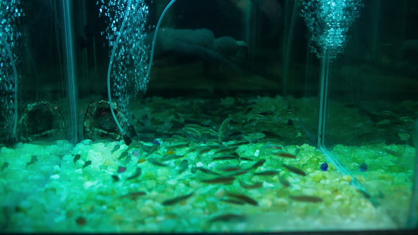 Fish spa in nature stock footage video 5516267 shutterstock for Garra rufa fish