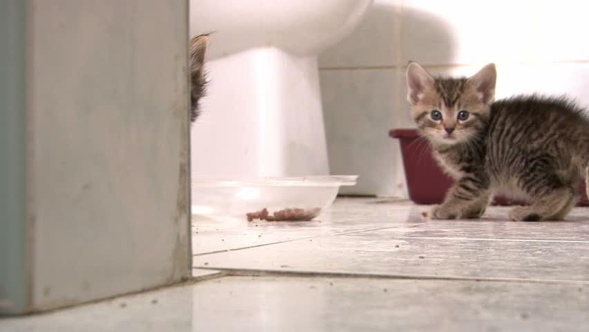 Kitten Hiding behind Wall then Hissing