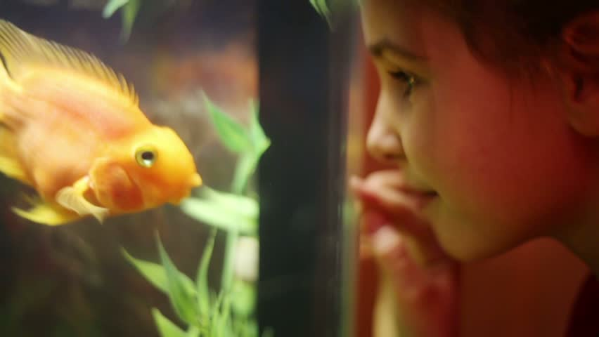 Girl looks at fish swimming in aquarium and presses her nose against glass - HD stock footage clip