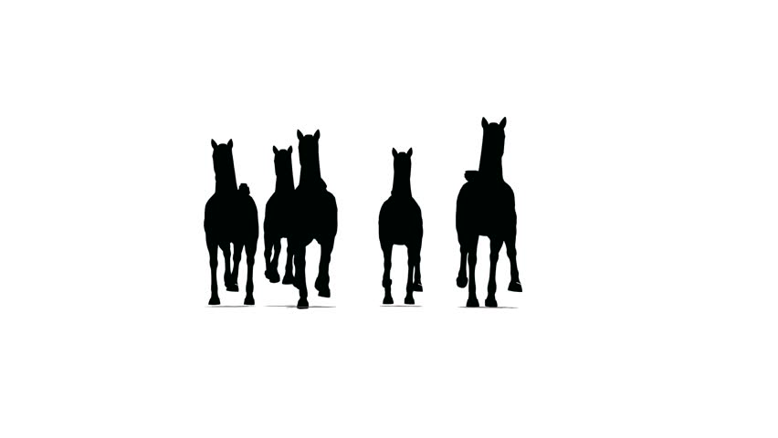 herd of horses runs and runs by, the front view, black silhouette on white background  - HD stock footage clip