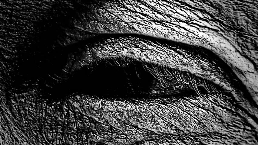 Human eye opening wide, transformed to look very strange. Black and white, slight slow motion. - HD stock footage clip