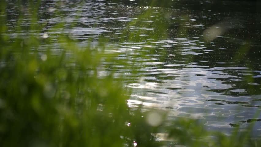 Grass waving on a riverside