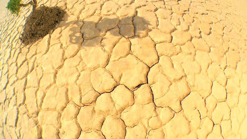Overhead concept climate change shot of green tree growing in barren desert landscape in wide angle - HD stock footage clip