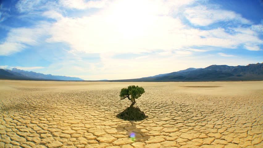 Concept climate change shot of green tree growing in arid desert landscape with hills behind - HD stock footage clip