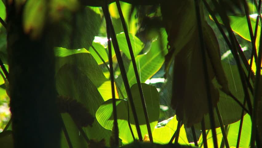 Rain falling on abundant lush green plants in environmental rainforest - HD stock video clip