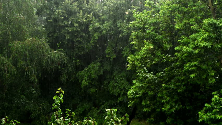 Heavy rain falling in the park, trees in the background. 1920x1080 full hd footage. | Shutterstock HD Video #6773416