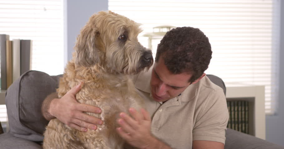 Man petting his pet dog - 4K stock footage clip