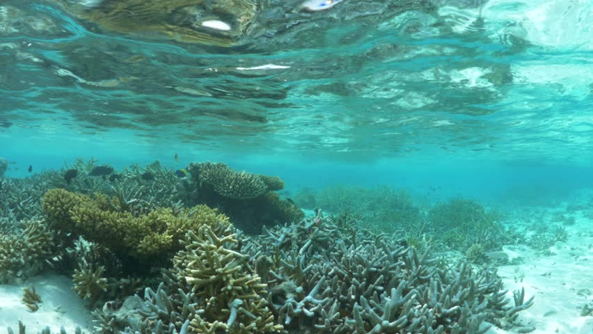 4K   Shallow Water Coral Reef   Maldives Stock Footage ...