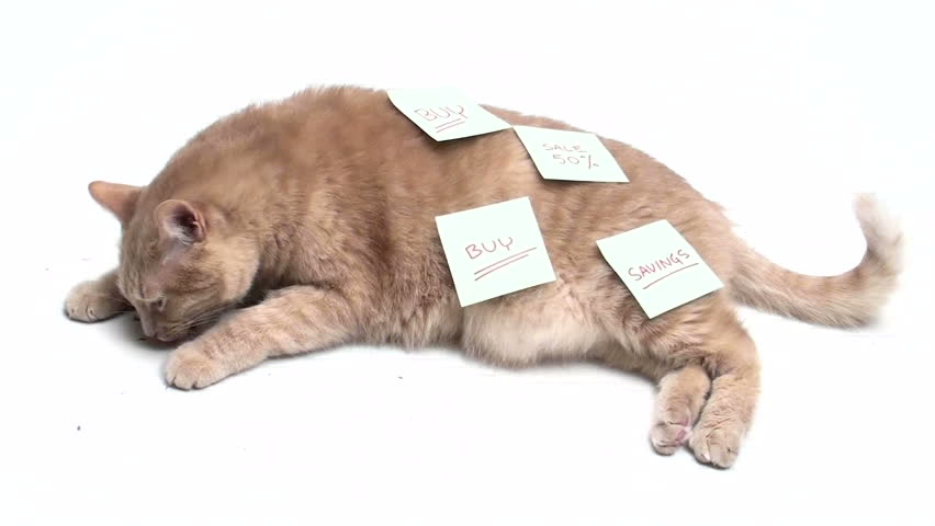 Cat covered in post it notes - HD stock video clip