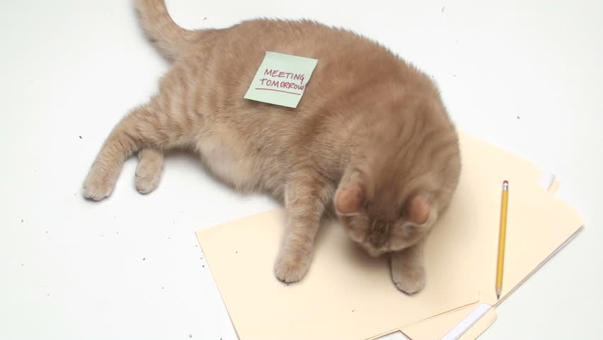 Cat with post it note MEETING TODAY - HD stock video clip