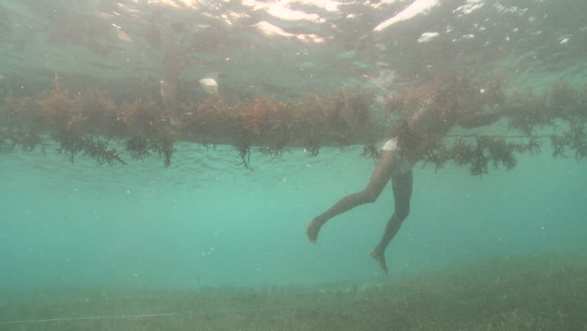 Header of Agar