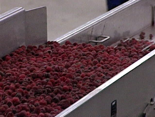 Industrial Processing of Frozen Raspberries - SD stock footage clip
