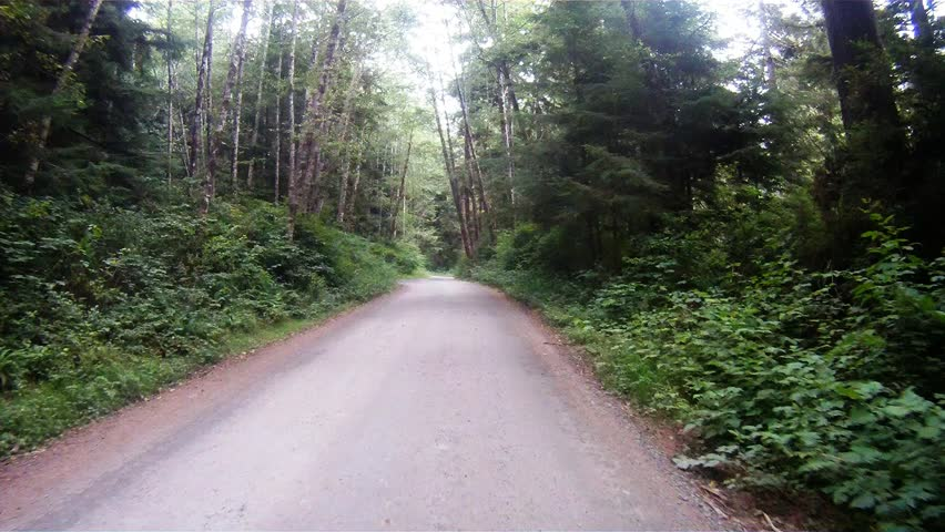 Slow Cruise Through Rain Forest Woods Leads to Fork in the Road