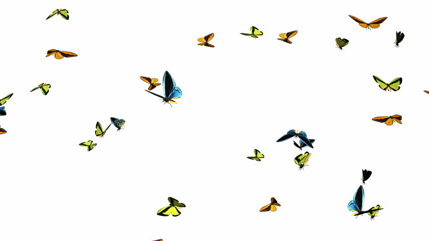 Looping Butterflies Slow Swarm Animation 1. With Alpha Mask, isolated on white - HD stock video clip