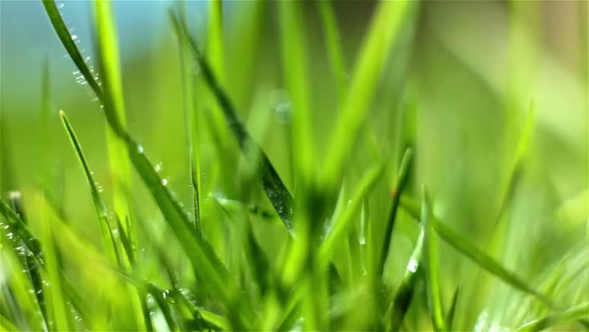 green grass macro - HD stock footage clip