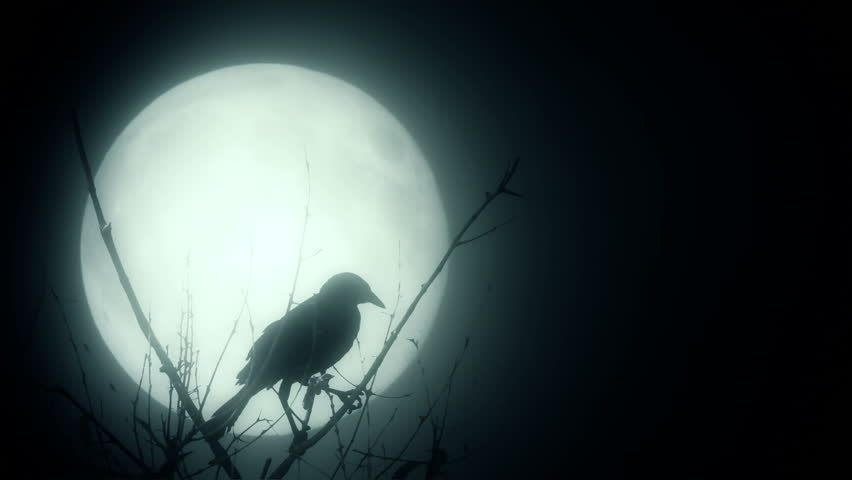 Raven illuminated by a full moon | Shutterstock HD Video #7223884
