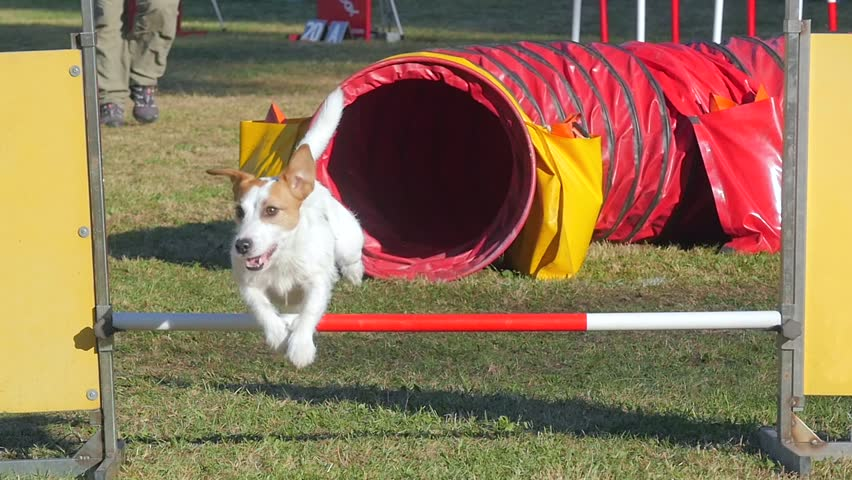Header of agility