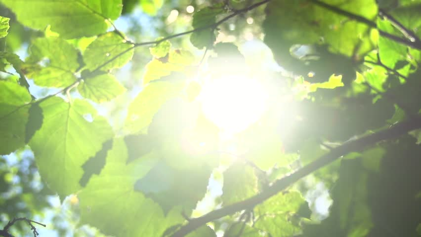 Nature background. Beautiful Sun shine through the blowing on wind tree green leaves. Blurred abstract bokeh with sun flare. Sunlight. Sunflare. Slow motion 240 fps. High Speed camera shot 1080p - HD stock footage clip