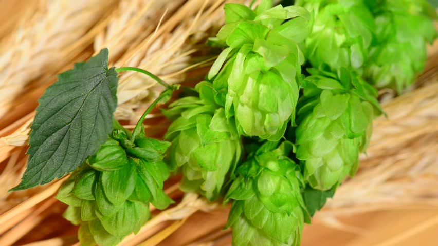 hops and barley malt in the basket,panning - HD stock video clip