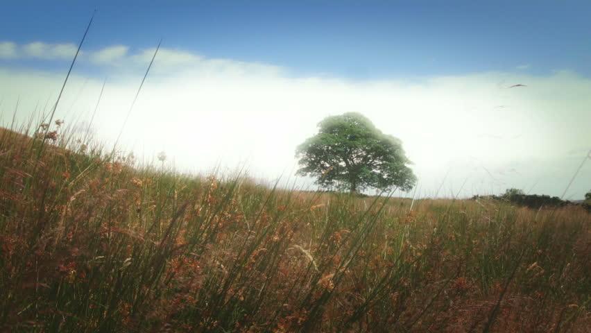 Beautiful Oak Tree Landscape stock footage. Single Oak tree situated on a Yorkshire Moor, England. Blackmagic Cinema Camera.