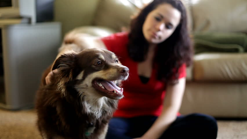Focused on Dog with Girl petting - HD stock footage clip