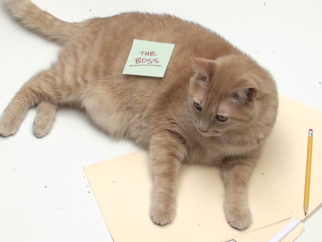 """Cat with post it note """"The Boss"""" - NTSC - SD stock video clip"""