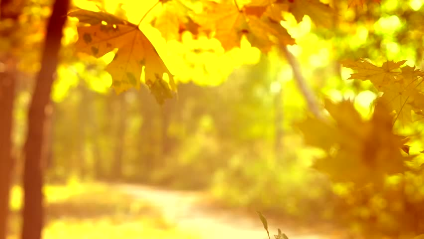 Autumn scene. Falling autumn leaves over Yellow Blurred Fall autumnal background with colorful leaves and sun. Autumn park. Slow motion video footage full HD 1080, high speed camera shot 240 fps - HD stock footage clip