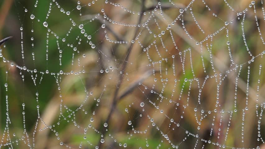Cobweb with fresh morning dew nature background