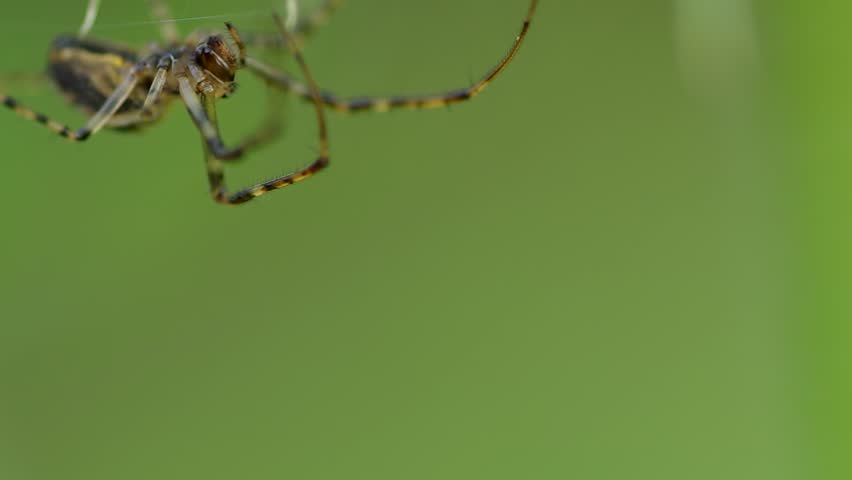 Spider on a spider web in the wind