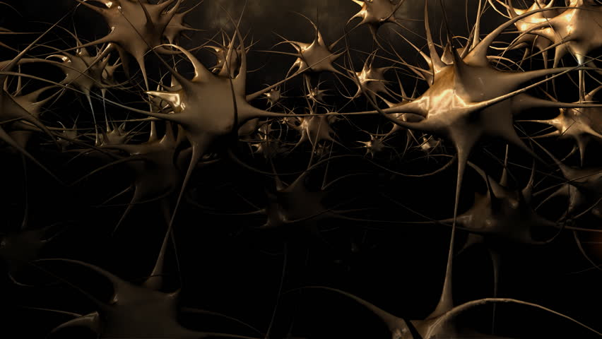Fly through human brain - HD stock video clip