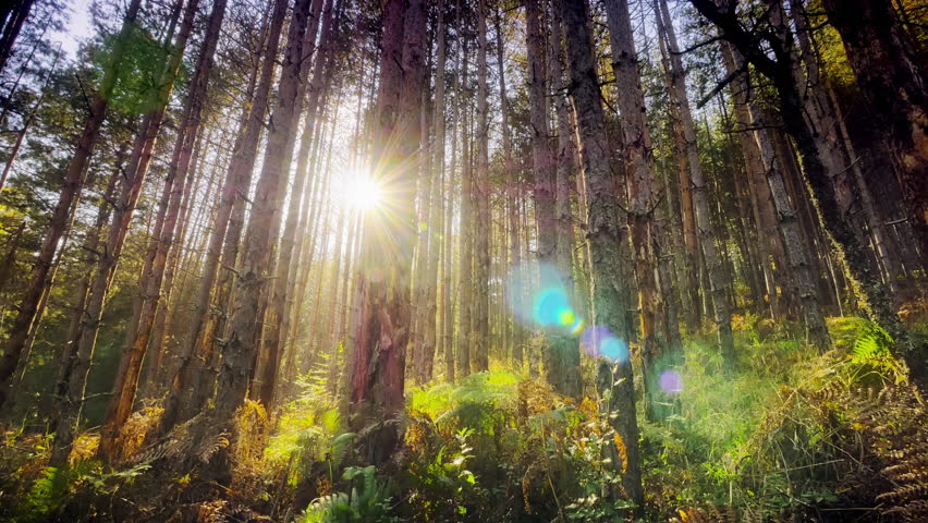 4K Dolly shot into deep dense forest with sunrays shining - 4K stock footage clip