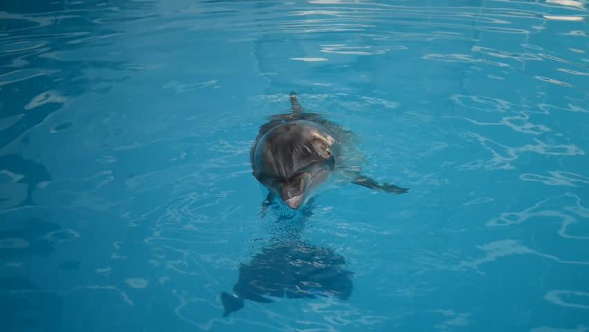 Dolphin are swimming in the aquarium