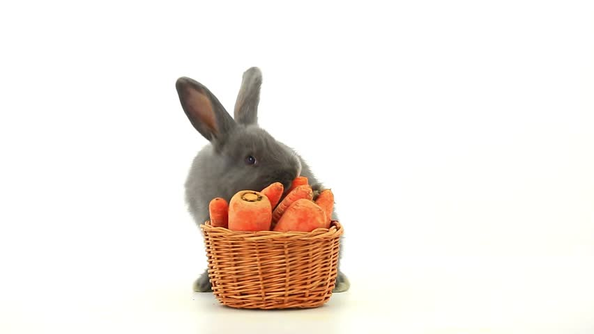 gray rabbit with a basket eats carrots - HD stock footage clip