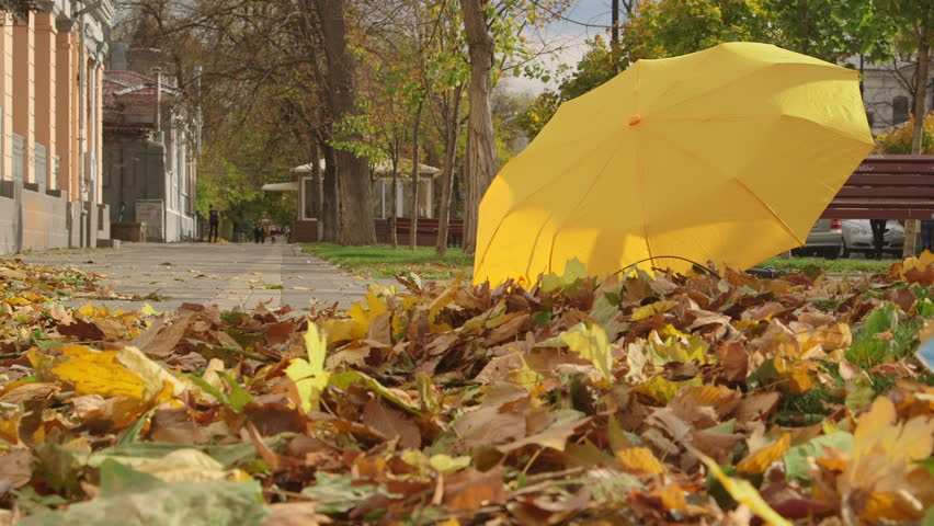 Autumn colors in the city - HD stock video clip