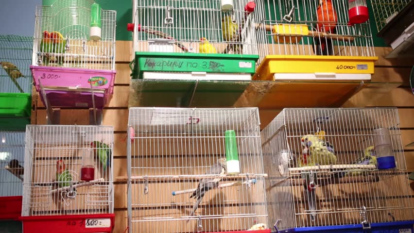 Many small colorful parrots in cages in animals store