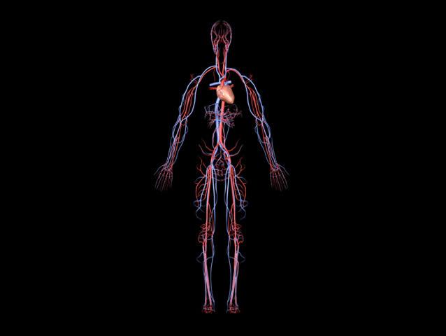 NTSC Arteries and Veins